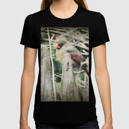 Female Cardinal on Wooden Fence T-shirt
