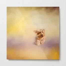 Into the Wind - Yorkshire Terrier Metal Print