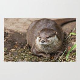 Sunning Otter Rug