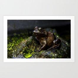 Toad in Canadian Rockies Art Print