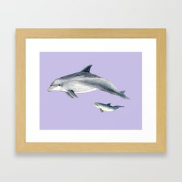 Bottlenose dolphin purple background Framed Art Print