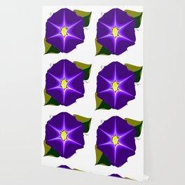 A Large Purple Morning Glory, Wildflower Series Wallpaper