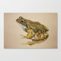 frog Canvas Prints featuring  frog by Diane Nicholson
