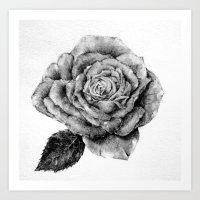Rose sketch Art Print
