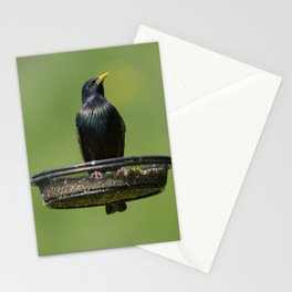 Starling on feeder 2 Stationery Cards