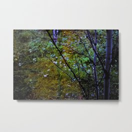 In Between Seasons Metal Print