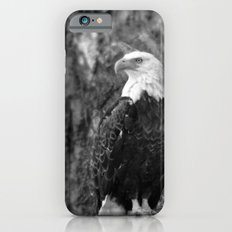 Haliaeetus leucocephalus iPhone 6s Slim Case