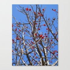 Blossoms On A Barren Tree Canvas Print