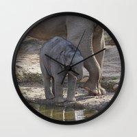 baby elephant Wall Clocks featuring Elephant Baby by MehrFarbeimLeben