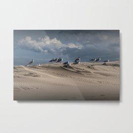 Waiting Gulls on Top of A Sand Dune Metal Print