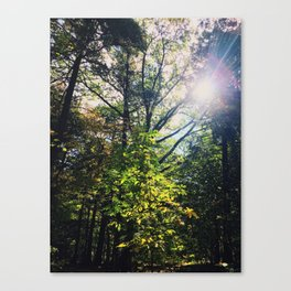 Shining down onto thee Canvas Print