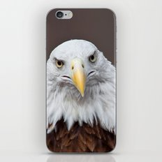 Bald Eagle Face iPhone & iPod Skin