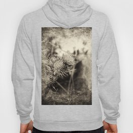 Beautiful thistle growing wild and sepia texture Hoody