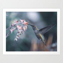Female Anna's Hummingbird Art Print