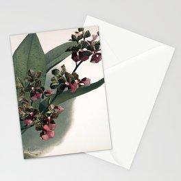 Vintage Orchid Print - Reichenbachia (1894) - Oncidium lanceanum Stationery Cards