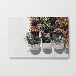 Succulent Wall Metal Print