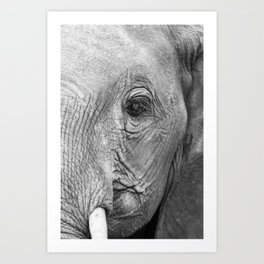 Elephant's watch Art Print