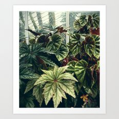 Beautiful Begonias Art Print
