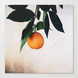 Hanging Fruit Canvas Print
