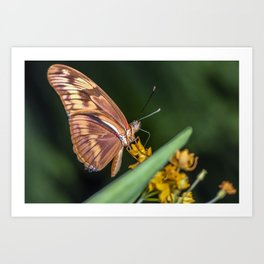 Butterfly on a flower Art Print