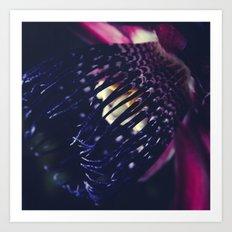 Passiflora Alata - Winged Stem Passion Flower - Ruby Star - Ouvaca Art Print