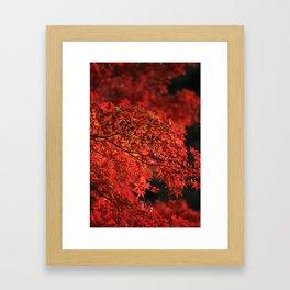 Red Japanese Maple Photography Framed Art Print