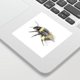 White-tailed bumblebee Sticker
