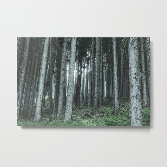 Woodland, Forest, Trees Metal Print