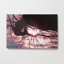 Sunshine Filtering Through Leaves Metal Print
