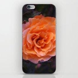 Holland Park Rose iPhone Skin