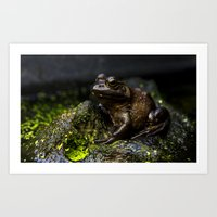 Toad in Canadian Rockies Art Print