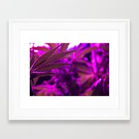 cannabis Framed Art Prints featuring Cannabis  by End Of Prohibition