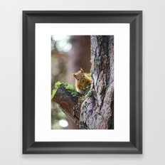 Baby Red Squirrel  Framed Art Print