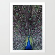 Greact Ocean Road Peacock Art Print