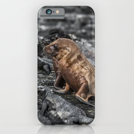 Baby sea lions surrounded by marine iguanas Galapagos iPhone Case