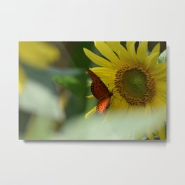 A Butterfly on a Sunflower in the Smoky Mountains Metal Print