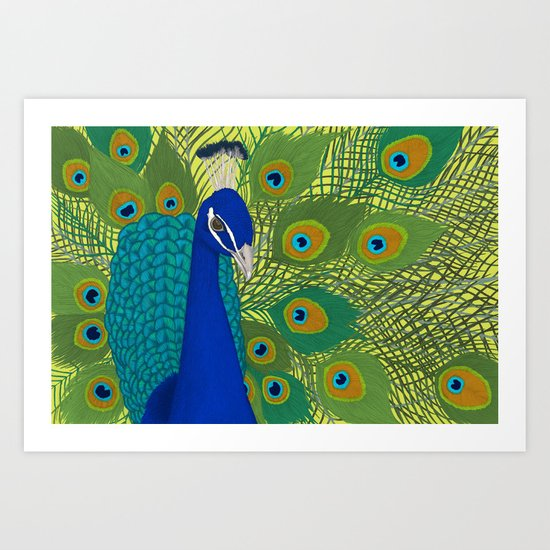 Peacock in Colour Art Print