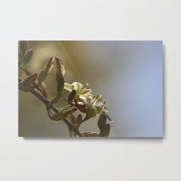 Hesperaloe parviflora Flower in Sepia Tones Metal Print