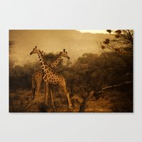 giraffes Canvas Prints featuring Giraffes by DIEGO ARROYO