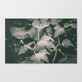 new growth [two] Canvas Print