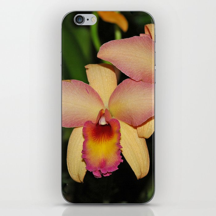Cattleya (The Corsage Orchid) iPhone Skin