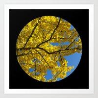 Trees from below 5 Art Print