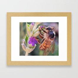 Lavender bee Framed Art Print