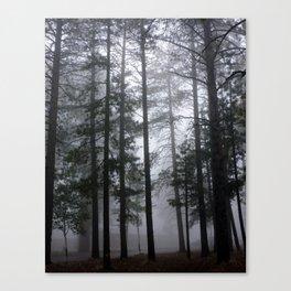 Mist Fog Ponderosa Pine Trees Canvas Print