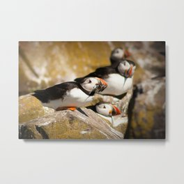 Puffin with Lunch Metal Print
