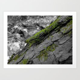 Selectivecolor Moss Art Print