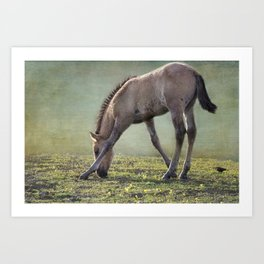 Bella's Filly and a Friend Art Print