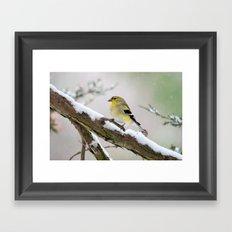 Balancing Act (American Goldfinch) Framed Art Print