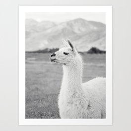 Mountain Llama Art Print