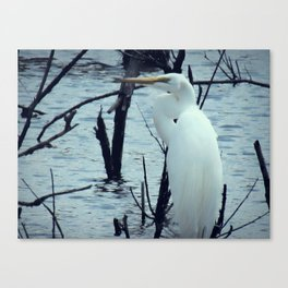 Great Egret White Bird Blue Water A107 Canvas Print